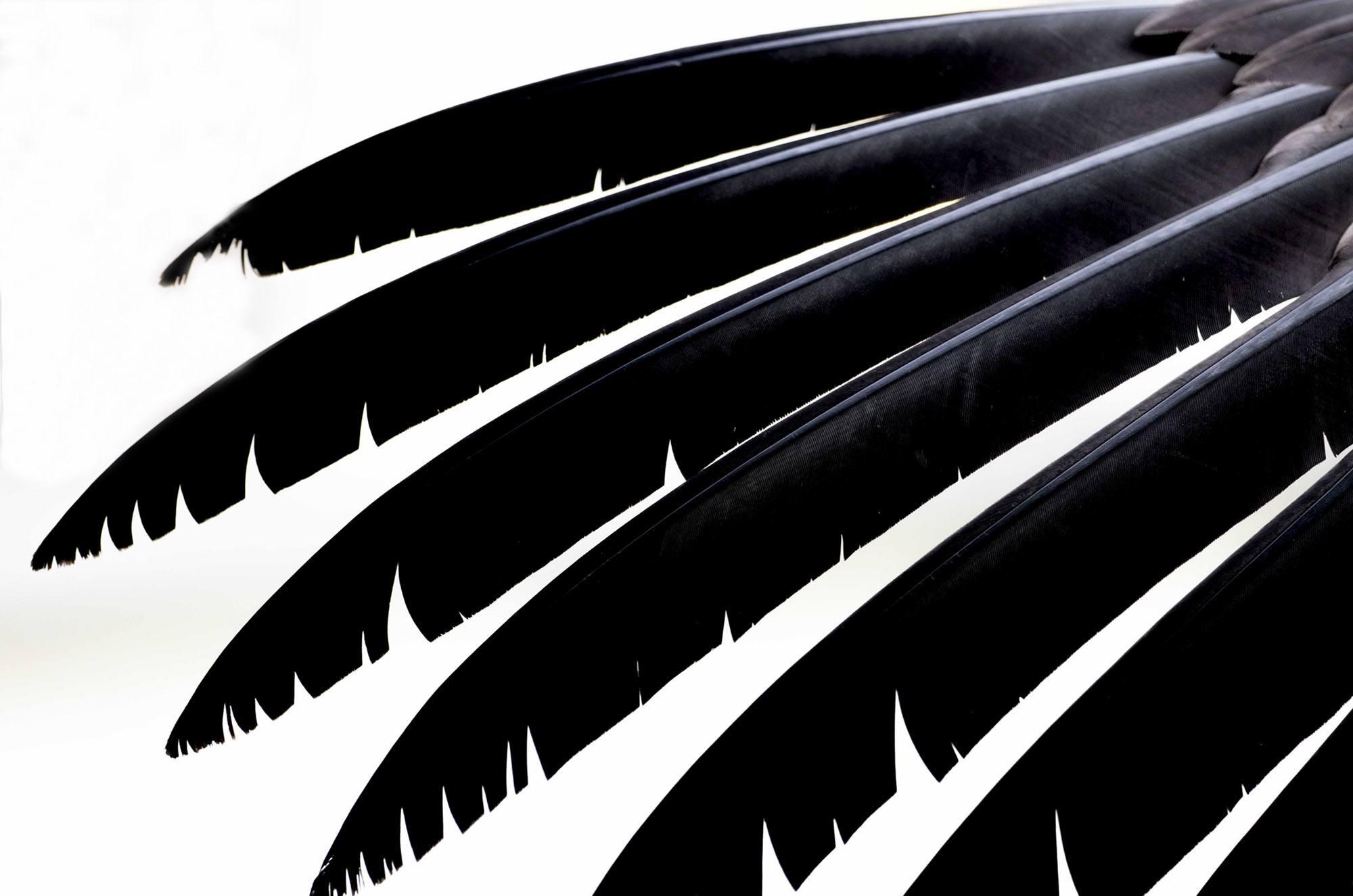 Feathers, veren. Siehu Photography. photogrpher Siebe Hubers. Siehu Fotografie, fotograaf Siebe Hubers.