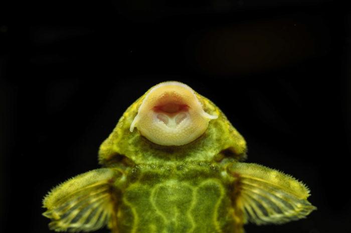 Fish,Animal, Wild life, Siehu-Photograpohy