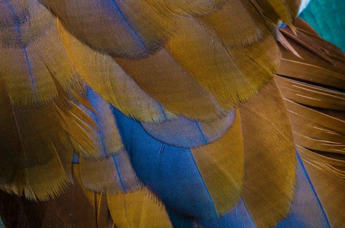 sun parakeet, Feathers,Animal, Wild life, Siehu-Photograpohy