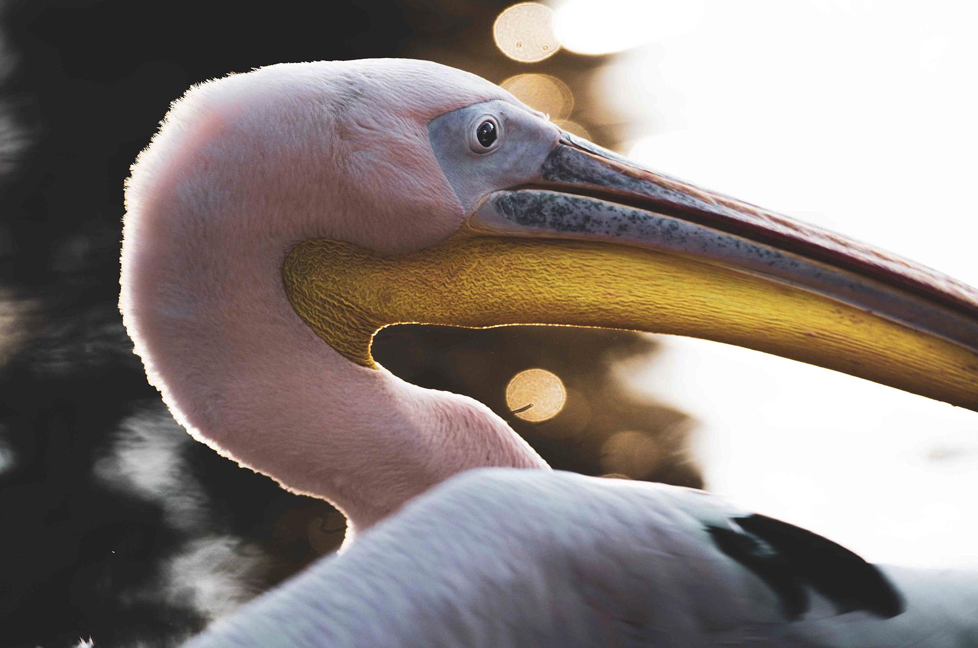 Animal, Wild life, Siehu-Photograpohy